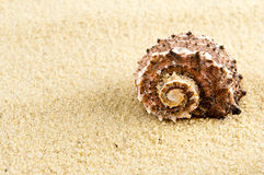 Lone seashell. Lone spiral seashell on a sandy background Royalty Free Stock Images