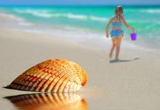 Lone Seashell on Beach Stock Image