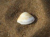 Lone shell Royalty Free Stock Photography