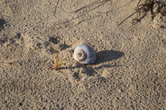 A lone shell washed ashore. On East Hampton, New York, Main Beach stock photo