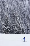 Lone skier. Against background of beautiful sonw covered pine trees royalty free stock photography