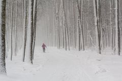 Lone skier in a snow-covered park Royalty Free Stock Photo