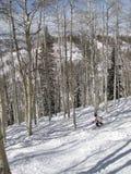 Lone skier weaves her way through baraspens Stock Photography