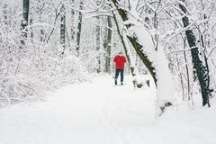 Lone skier in the woods Stock Images