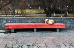 A lone sleeping dog on the street. Bench Royalty Free Stock Photography