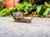 A lone snail. Stock Photography