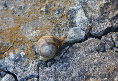 Lone snail crawling on old cracked concrete Royalty Free Stock Photos