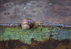 Lone snail crawling on rusty metal surface Royalty Free Stock Image
