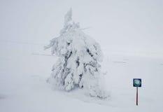 A lone snow-driven pine Stock Photo