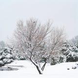 lone snowtree royaltyfri bild
