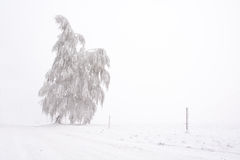 Lone snowy and frosted tree on the plain Stock Photo