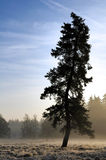 Solitary tree. A solitary tree standing in cold autumn fog Stock Images