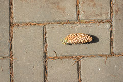 A lone spruce pine cone lying on a sidewalk tile in an autumn pa Royalty Free Stock Photos