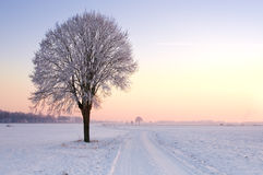 Lone standing sunset winter tree. Lone standing winter tree in a pale sunset landscape Royalty Free Stock Photography