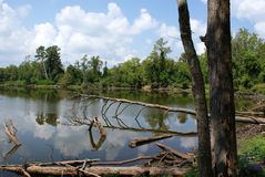 Lone Star Lakes royalty free stock photo