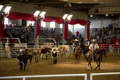 Lone star stampede show at  Dallas Fair Park Stock Image