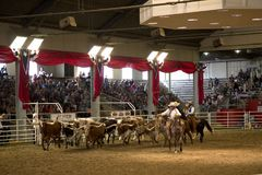 Lone star stampede show at State Fair Texas Royalty Free Stock Image