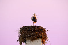 Lone stork on his nest. Summer morning in East Europe and lone stork in awaiting his second half Royalty Free Stock Images