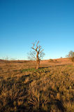 Lone struggling tree Stock Photo