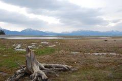 Lone stump on beach stock photo