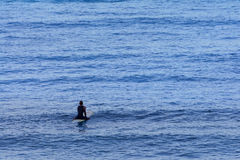 Lone Surfer Waiting for the surf at dawn Royalty Free Stock Photography