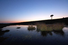 New forest lone tree. Lone tree in the new forest, in the south of england royalty free stock photography