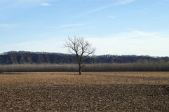 lone tree Royaltyfria Bilder