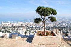 Lone Tree. A lonely tree in the front of Haifa gulf, Israel Royalty Free Stock Photography