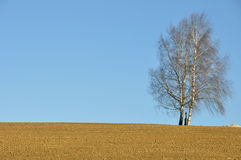 Lone tree. In wide landscape Stock Photography