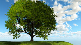Lone Tree Royalty Free Stock Photography