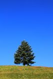 Lone Tree Royalty Free Stock Image