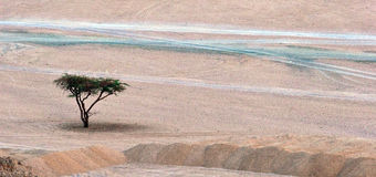 Lone tree. In the desert Stock Image