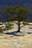 Lone Tree. A lone tree growing on a rock Stock Photography