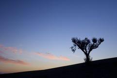 Lone tree Royalty Free Stock Photo