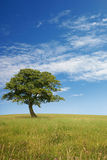 Lone Tree. A Lone Tree with Blue Sky and Grass Royalty Free Stock Photo