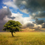 Lone Tree. A Lone Tree with Cloudy Sky and Grass Stock Photography