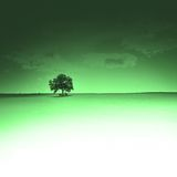 Lone tree. With art effect and copyspace Royalty Free Stock Image