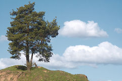 Lone tree. Royalty Free Stock Photo