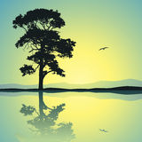 Lone Tree Stock Photography