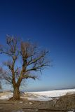 lone tree Royaltyfria Foton