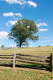 Lone Tree. A View of a Lone Tree with a Fence in the Foreground royalty free stock photography