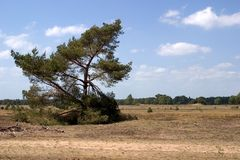 Lone tree. In dry landscape, against a partly clouded sky Royalty Free Stock Photography