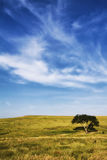 The Lone Tree Stock Image