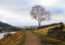 Lone tree royaltyfri foto