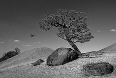 Lone tree. A single tree on a hill Stock Images