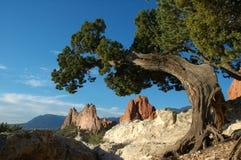 lone tree Royaltyfri Bild