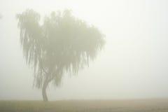 lone tree Royaltyfria Foton