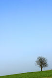 Lone tree. On the hill. lots of space for copy Stock Image