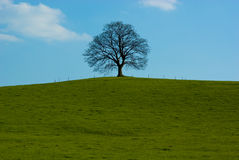 lone tree Royaltyfri Bild