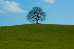 Lone tree. Dominant tree maple on horizon against blue heavens Royalty Free Stock Image